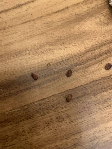 Found what looks like apple seeds in my basement