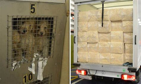 Dog smuggling: Cruel smuggler brought puppies into country