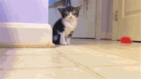 Self Care – Adorable Animal (Mostly Cat) Gifs… Stolen from