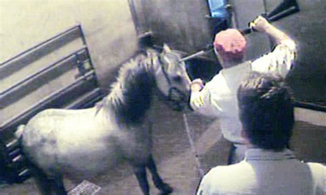 The grim reality of our abattoirs: Grisly image from