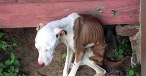 Unbelievably Cruel Man Left Dog Without Food Or Water In