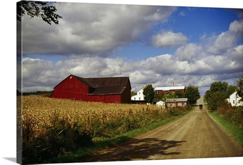 Amish farm buildings and corn field along country road