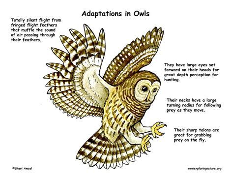 Adaptations: Structural and Behavioral